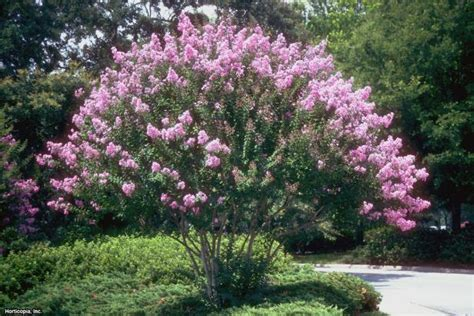 Smart Plant and Tree Choices for an Allergy-Friendly
