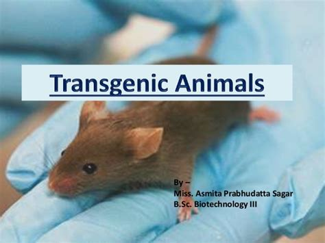Transgenic animals - A brief review