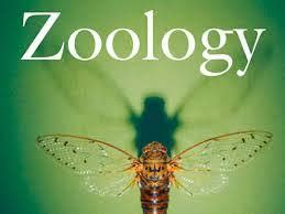 Zoology Assignment pdf BS-B