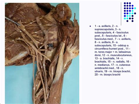 Clinical anatomy of the upper limb - online presentation